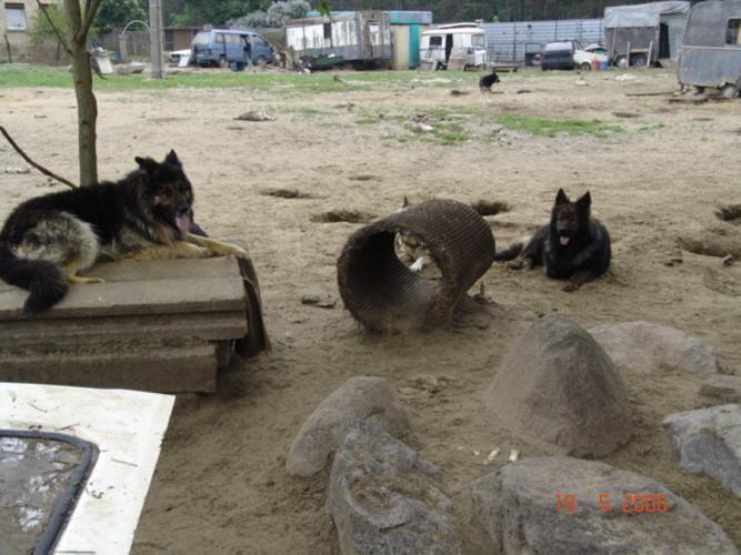 Liebenwalde Hunde Hunde Gutachter Me